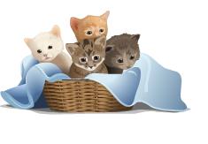 2015-04-04 kittens